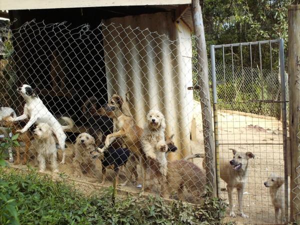 Muitos_cachorros