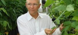 biotecnologia_soja_aids