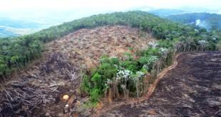 fiscalizacao-investiga-desmatamentos-ilegais-no-nordeste-de-minas