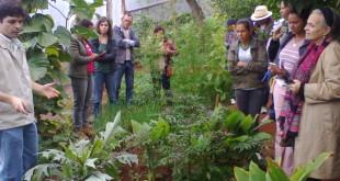 emater-mg-e-santuario-do-caraca-resgatam-o-cultivo-de-hortalicas-da-culinaria-mineira
