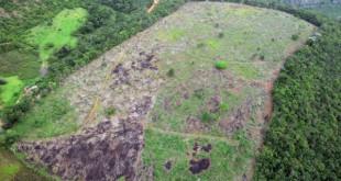 fiscalizacao-embarga-areas-de-desmatamento-ilegal-de-mata-atlantica-no-vale-do-jequitinhonha
