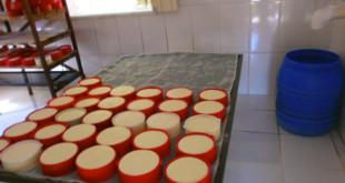 queijarias-de-medeiros-habilitadas-pelo-ima-podem-vender-para-todo-o-estado