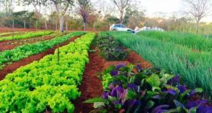 horticultura_em_Claro_dos_Poções