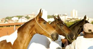 cavalos_gameleira