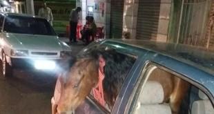 ponei_no_carro