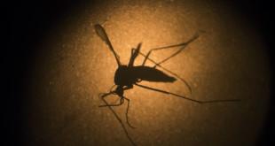 Google Zika Virus Help