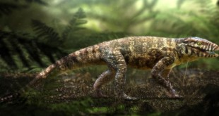 crocodilo_mg_1