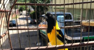 aves_ipatinga