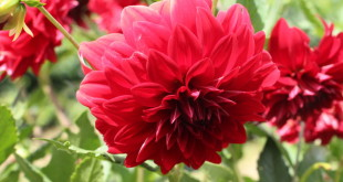 flores_comestiveis_mg
